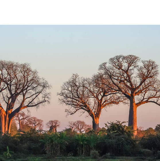 Desktop baobab innovator collage
